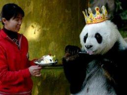 King_of_Pandas